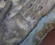 ange nimbé au Musée d'Art et d'Archéologie du Périgord (4)