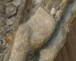 ange nimbé au Musée d'Art et d'Archéologie du Périgord (8)